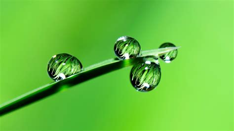 stock images drops grass green  stock images