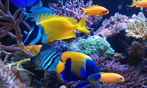 colorful saltwater fish saltwater fish wallpaper 58 images