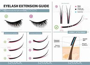 Eyelash Extension Guide  Tips And Tricks For Lash