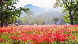Beautiful South Korea Landscape in 4K UHD Timelapse on Vimeo