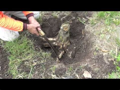 How To Remove A Tree Stump Youtube