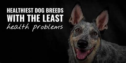 Dog Breeds Healthiest Health Least Problems Dogs