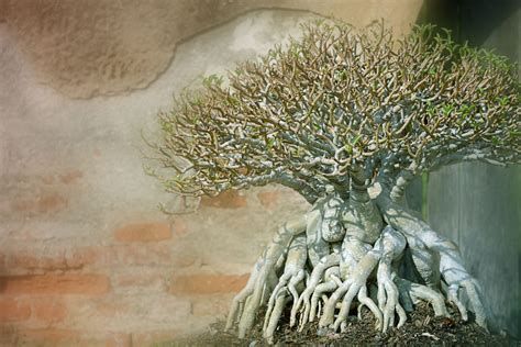 types  bonsai trees  style  shape  pictures