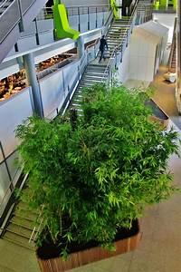 Tropische Pflanzen Kaufen : tropische bambusa pflanzen raumbegr nung bis 8m online kaufen ~ Watch28wear.com Haus und Dekorationen