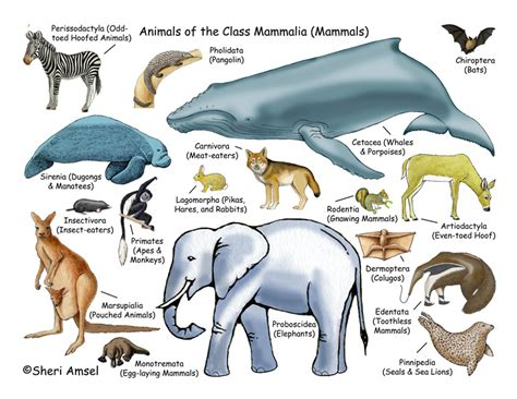 Mammals live knowledge world