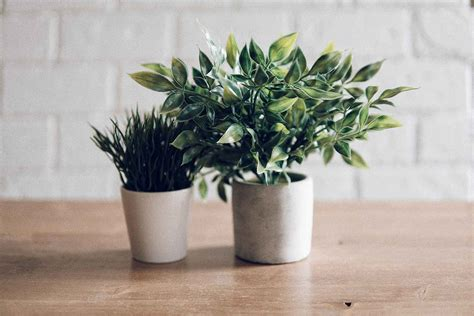 Possessing our own manufacturing and packaging plant, we pay extra care to maintain our product quality as well as setting up a dedicated r&d team to enhance and. Plant care: why you should add a coffee filter to your pots | Better Homes and Gardens