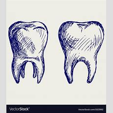 Tooth Royalty Free Vector Image Vectorstock