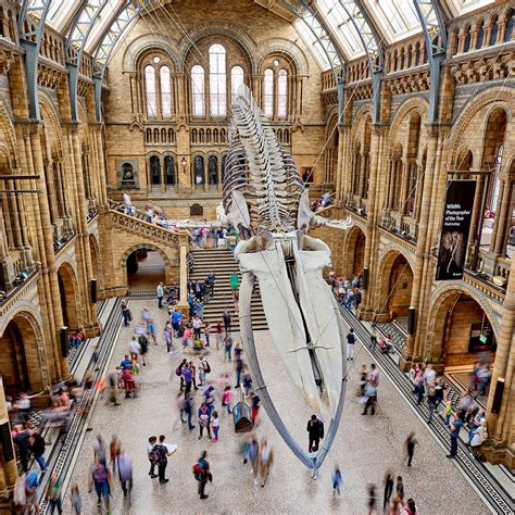 Record-breaking visitor numbers for the Natural History ...