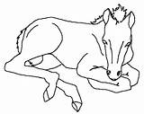 Horse Miniature Coloring Pages Animal Template sketch template