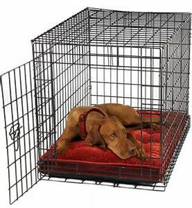 how to crate train your puppy or dog adopt a petcom blog With why crate a dog