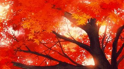 Tree Anime Maple Loren Carolina San Mitsuki