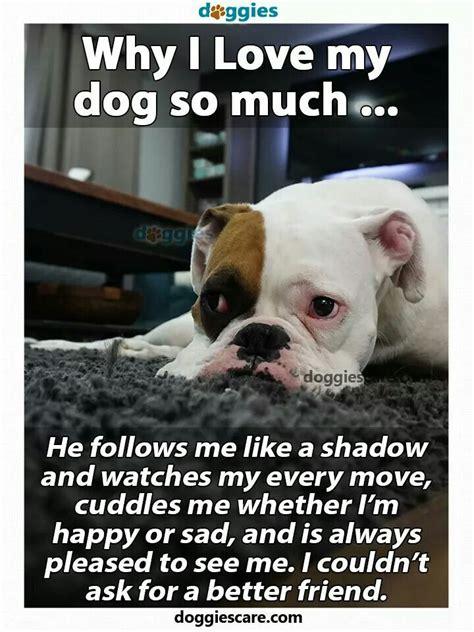 pin  patti sanford  dogs dogs pet dogs  love