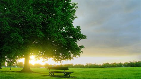 Tree Backgrounds by 40 Hd Tree Wallpapers Backgrounds For Free