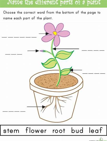 Lesson Plan Plant Functions Structures Captions Illustrations