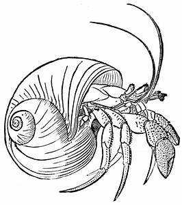 line drawings of shells | Hermit Crab | Embroidery ...