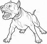 Barking Dog Angry Coloring Drawing Bull Aggressive Pit Terrier Perro Illustrations Dogs Ladrando Guard Hund Drawings Vectors Velichkovsky Anna Illustrazione sketch template