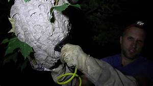Bald Faced Hornet Nest Removal