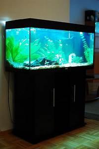 L Form Aquarium : aquarium juwel rio 180 aquarium pinterest aquariums ~ Sanjose-hotels-ca.com Haus und Dekorationen
