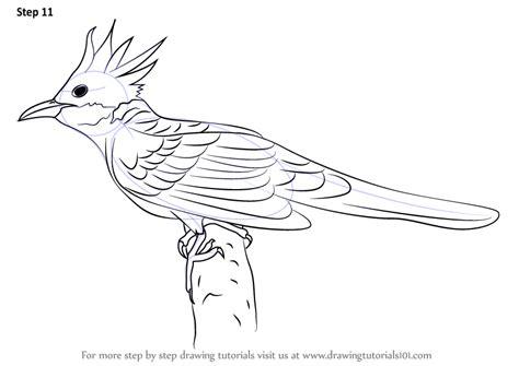 step  step   draw  cuckoo drawingtutorialscom