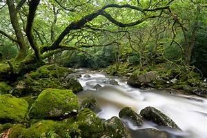 0044 Dartmoor, Devon Caine-Douglas DESIGN & PRINT