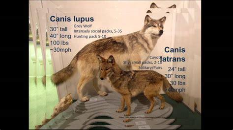 pawprint  history evolution  dog behavior youtube