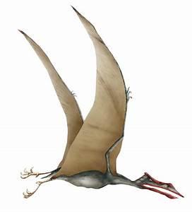 Quetzalcoatlus: largest flying animal…or not? | Bio-Aerial ...  Quetzalcoatlus
