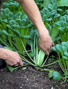 Pak Choi Anbau : 163 best lifestyle pflanzen ziehen selfmade images on pinterest garden plants awesome ~ Eleganceandgraceweddings.com Haus und Dekorationen