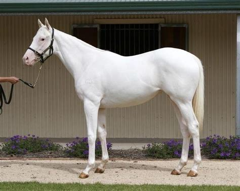 horse camarillo horses types different type breed foal every eye thoroughbreds breeding meaning human kentucky phenotypically