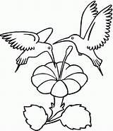 Hummingbird Coloring Printable sketch template