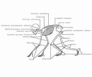 Skull Diagram Of A Dog Wiring Diagram Schematics