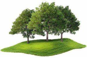 Trees Have A Positive Impact On Your Health