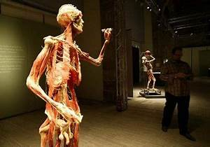 free dekstop wallpaper: The human body without skin