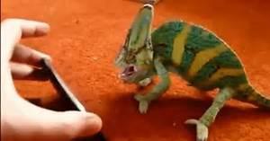Chameleon Color Change Gif Wwwpixsharkcom Images