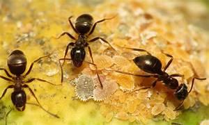 Ameisenstraße Im Haus : ameisenbek mpfung bek mpfen von ameisen durch den profi ~ Watch28wear.com Haus und Dekorationen