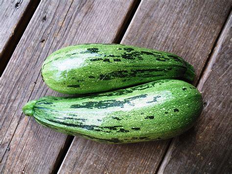 2 Varieties of Heirloom Zucchini You're Gonna Love ...