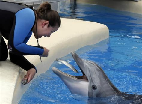 Brookfield Zoo Dolphins Are Pregnant