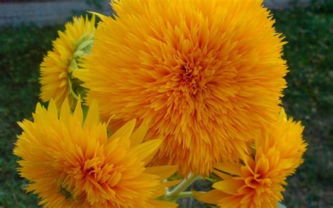 Yellow Flower Wallpaper (67+ images