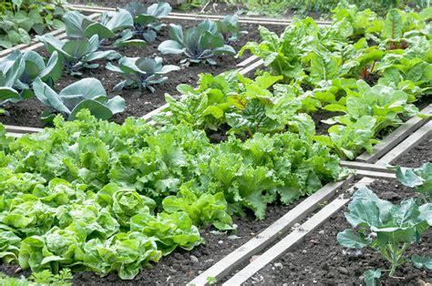 Gemüsebeet Richtig Anlegen by Gem 252 Sebeet Anlegen Im Garten 187 Tipps Ideen Und Anleitung