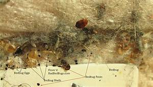 Small brown bugs that jump bing images for Tiny reddish brown bugs in bathroom