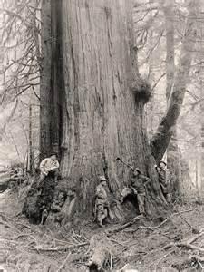 Old Picture of Lumberjack Big Tree