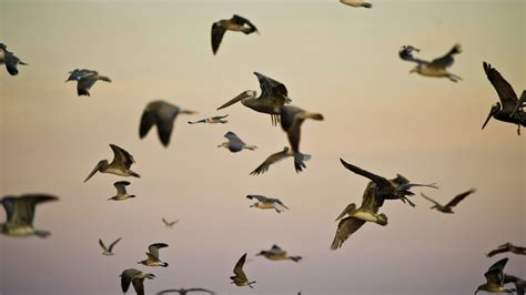 state of north america s birds report released to