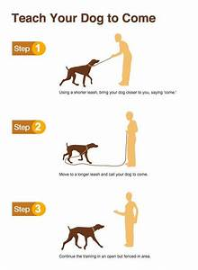 273 best images about infographics on pinterest cats With dog training commands