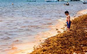 ¿Qué es el sargazo y por qué se acumula en las playas ...