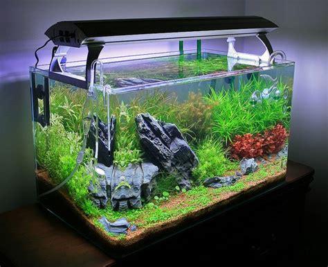 aquarium eau douce sans filtre