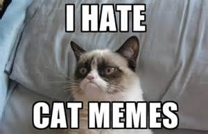 cat memes 10 reasons grumpy cat has overstayed 15 minutes of fame