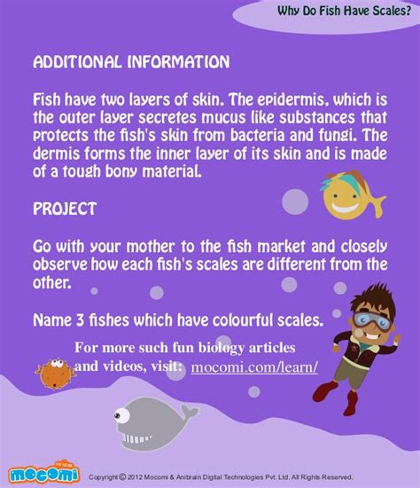 fish why scales mocomi skin