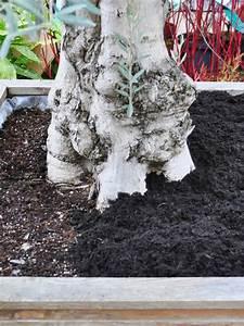 Winterschutz Für Kübelpflanzen : die gartenfaser optimaler winterschutz f r ihre beete und k belpflanzen der palmenmann ~ Avissmed.com Haus und Dekorationen