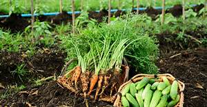 Ph Du Sol : quels l gumes cultiver avec un ph du sol acide ou basique ~ Melissatoandfro.com Idées de Décoration