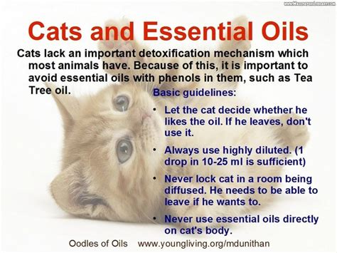 essential oils cats pin by faery bean on aromatherapy essential oils pinterest