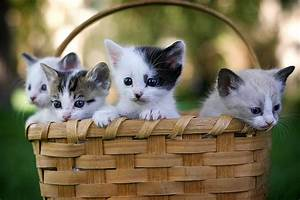 30, Cutest, Photos, Of, Cats, In, Baskets